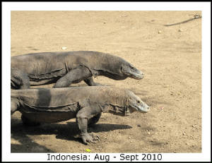 Photo_Gallery_Title_Pages/Indonesia_title.JPG